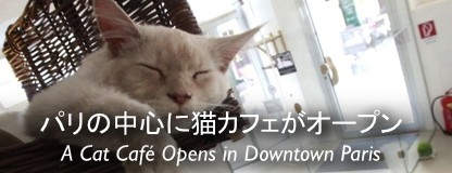 cat cafe in Paris