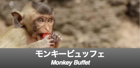 monkey-buffet-banner