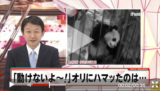 Video-Panda