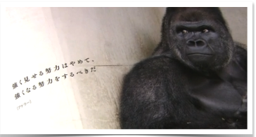 Gorila2-1