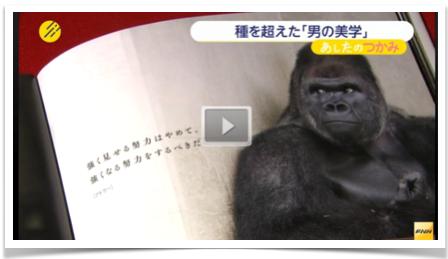 Gorilla2-video