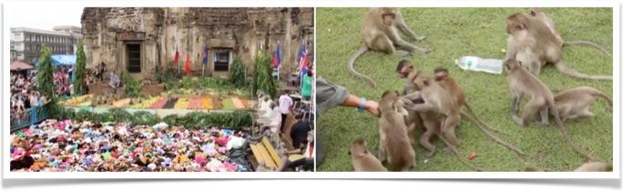 monkey-buffet-pic